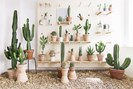 foto: kaktus københavn