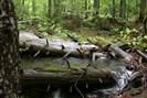 foto: wildnisgebiet dürrenstein