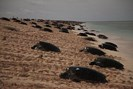 foto: queensland government, raine island recovery project