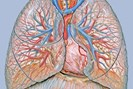 foto: wikipedia/patrick j. lynch, medical illustrator/