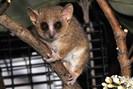 foto: david haring, duke lemur center