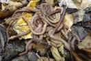 foto: simone cesarz/deutsches zentrum für integrative biodiversitätsforschung idiv