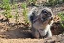 foto: brittany sumner/kalahari research centre