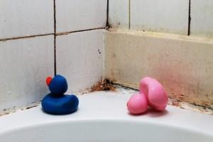 Was Tun Gegen Schimmel In Der Wohnung Umweltmedizin Derstandard