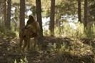foto: centro del lobo ibérico
