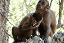 foto: michael haslam/ primate archaeology group