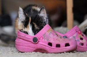 4b94e546378587 Wenn es um die richtigen Schuhe für Kinder geht.