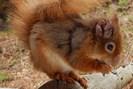 foto: dorset wildlife trust