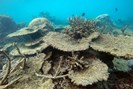 foto: greg torda, arc centre of excellence for coral reef studies