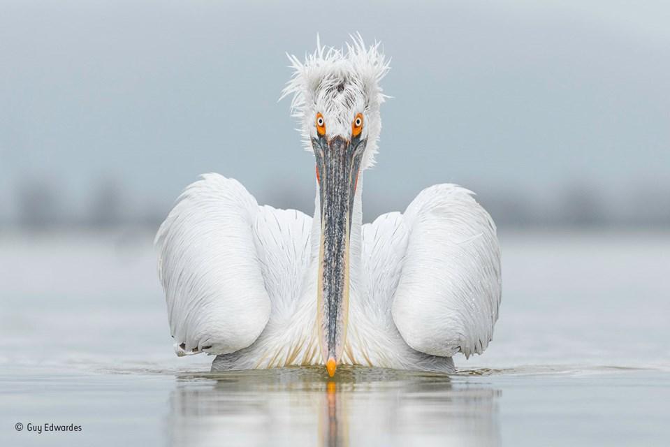 Die schönsten Tierfotos des Jahres - Reisen aktuell - derStandard.at ...
