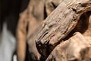 foto: kiril cachovski of the lithuanian mummy project