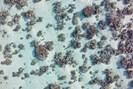 foto: elisa casella, leibniz-zentrum für marine tropenforschung