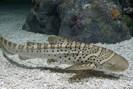 foto: monterey bay aquarium