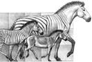 illustration: mauricio antón