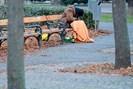 foto: apa/roland schlager