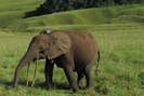 nathan williamson for gabon national parks