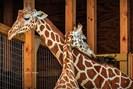 foto: animal adventure park harpursville