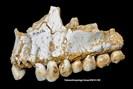 foto: paleoanthropology group mncn-csic