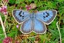 foto: afp photo / butterfly conservation / martin warren