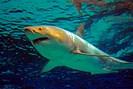 foto: apa/afp/okiknawa churaumi aquari