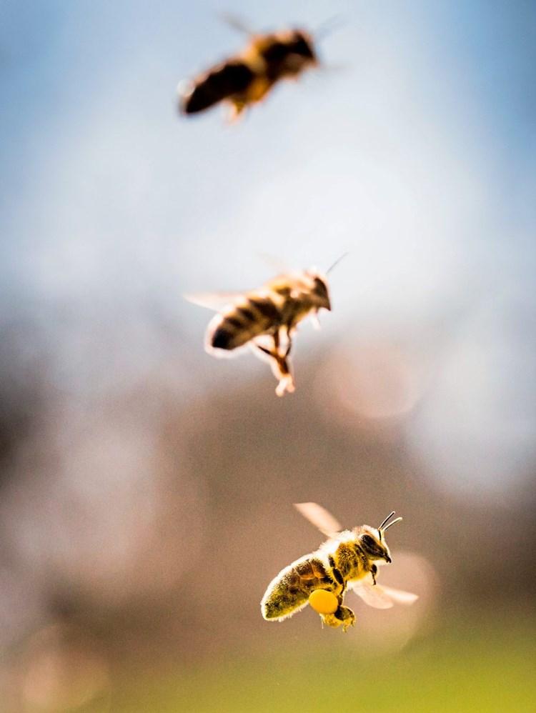 Hyposensiblisierung Gegen Bienenstiche Hilft Nicht Immer