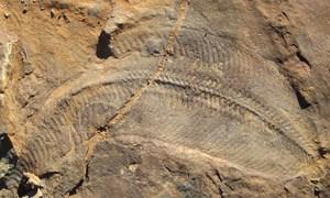 Umweltbedingungen bestimmten den Zeitplan der Evolution - Natur ...