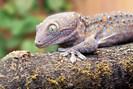 foto: lehmann/max-planck-institut für ornithologie