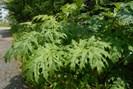foto: botanischer garten, uni graz