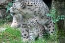 foto: apa/zoo salzburg