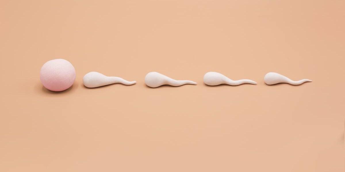 ich habe eine niedrige spermienzahl