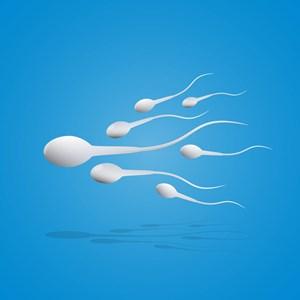 Genauer Betrachtet Wie Lange Spermien An Der Luft überleben