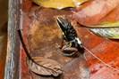foto: andrius pašukonis