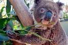 foto: apa/afp/australian reptile park/