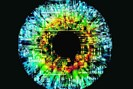 foto: science photo library