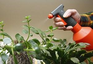 Die Heilende Wirkung Von Zimmerpflanzen Forschung Spezial