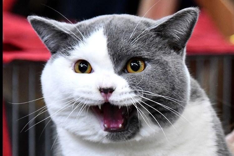 Keine Weihnachtsgeschichte Jetzt Kotzt Auch Die Katze Literatur