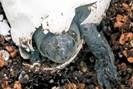 foto: turtle island