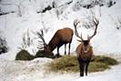 foto: nationalparks austria / heinz peterherr, sieghartsleitner