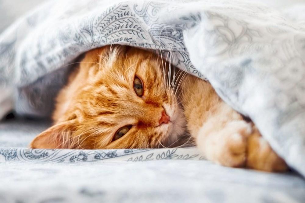 Kolumne: Pro & Kontra: Katze im Bett schlafen lassen - derStandard.de