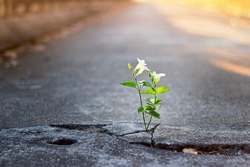 die hoffnung aufgeben