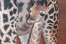foto: apa/zoo schmiding