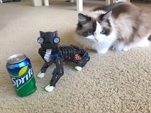 Purrfett-Dating-Seite fГјr Katzen