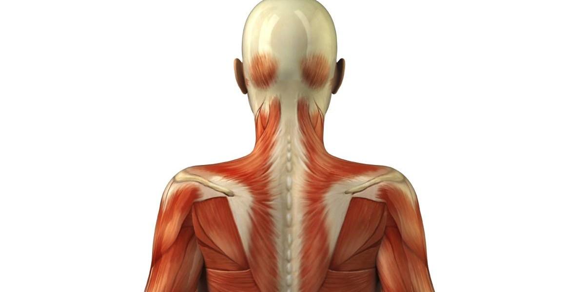 Bewegung & Fitness: Was das Bindegewebe für die Muskeln tut ...