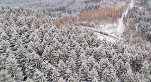 Immer Mehr Naturnahe Wälder Gehen Verloren Natur Derstandardat