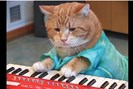 foto: youtube/keyboard cat
