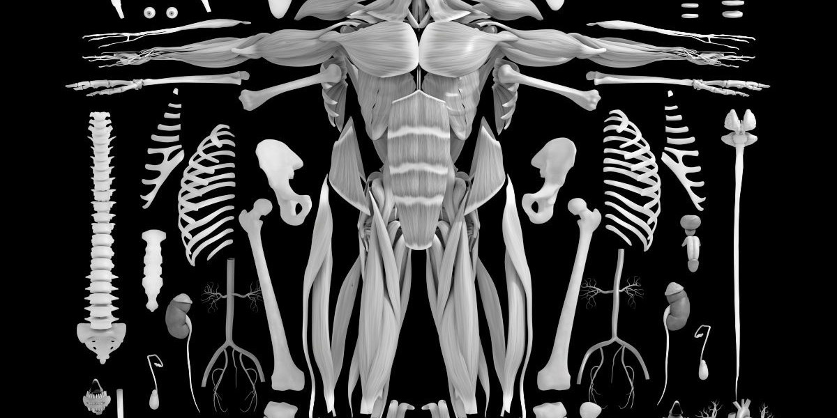 Schön Außen Anatomie Eines Krebs Zeitgenössisch - Menschliche ...