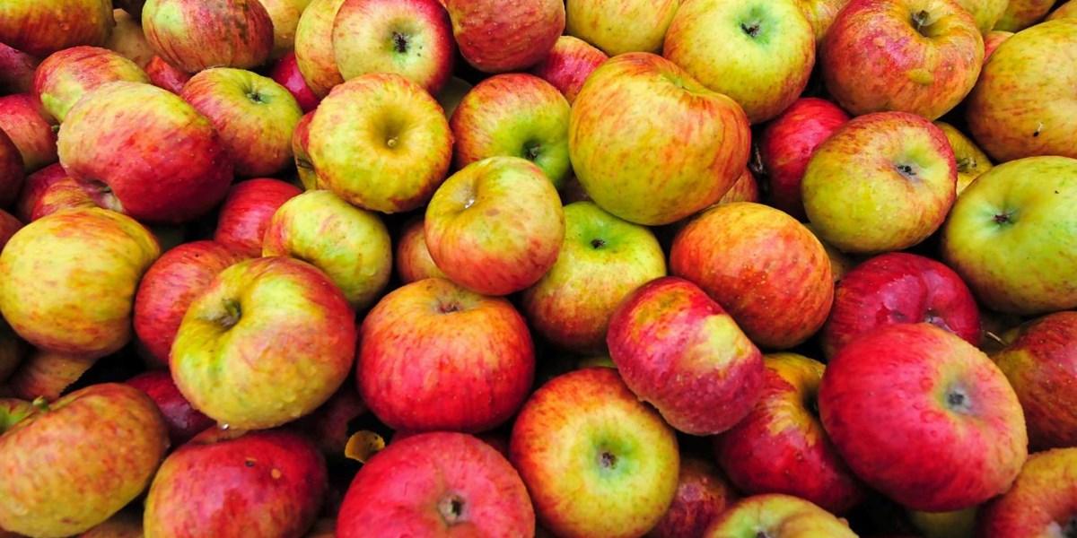 Alte Apfelsorten sind gesünder als moderne