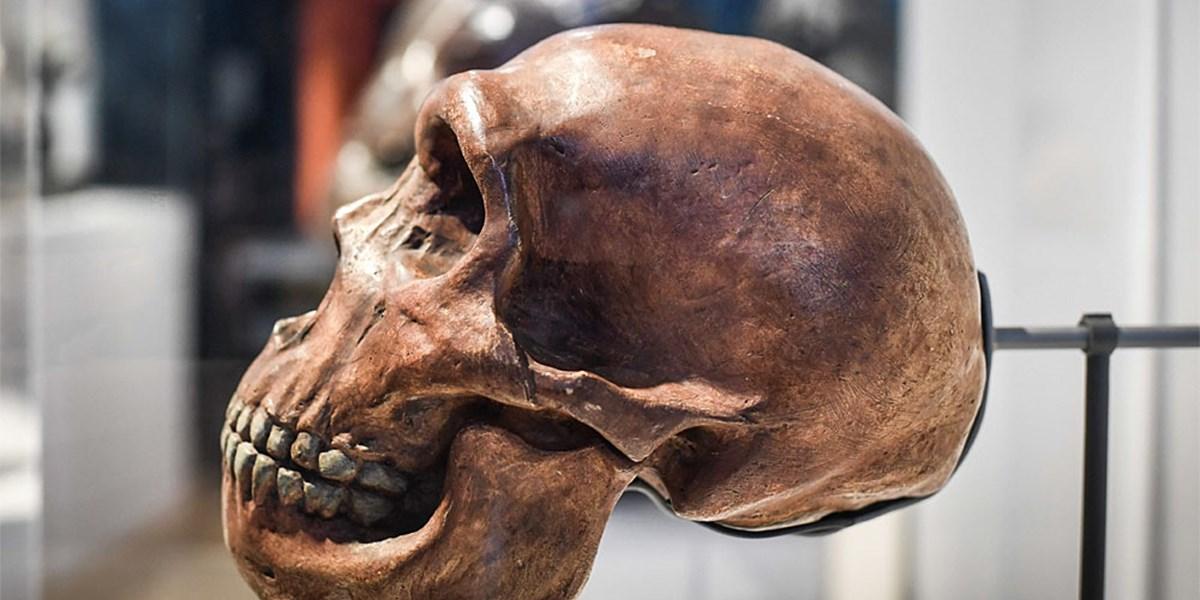 Anthropologie: Der Neandertaler konnte doch nicht so kräftig ...
