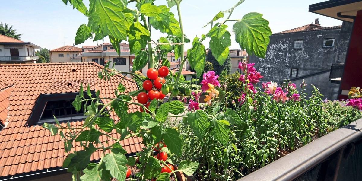 welche pflanzen empfehlen sie f r balkon oder terrasse mitreden user. Black Bedroom Furniture Sets. Home Design Ideas