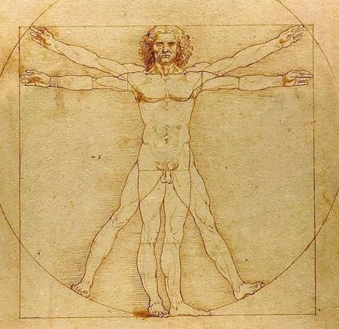 verhältnis beine oberkörper mann